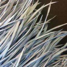 Pale Grey Goose Biot Feathers